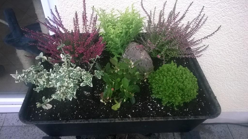 Terrasenbepflanzung